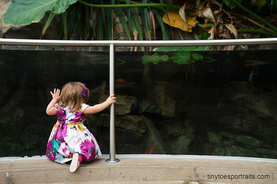 baby girl looking into an aquarium